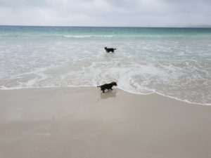 Chase and Archie of Albany at the Dog Beach