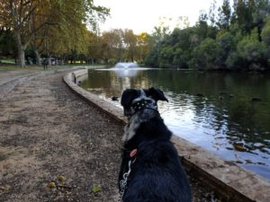 Chase at Hyde Park
