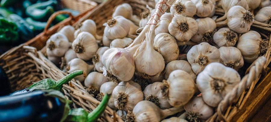 The Health and Healing Properties of Garlic